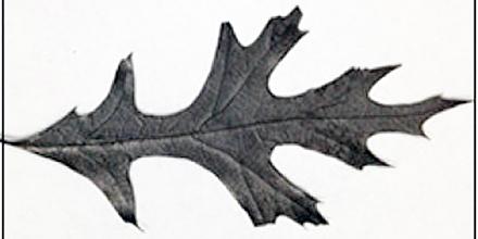 baked-leaves-battery