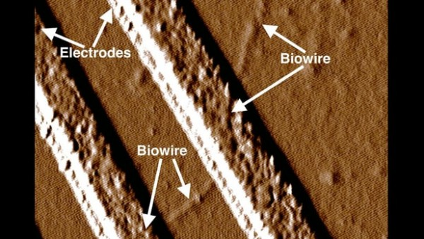 geobacter-nanowires